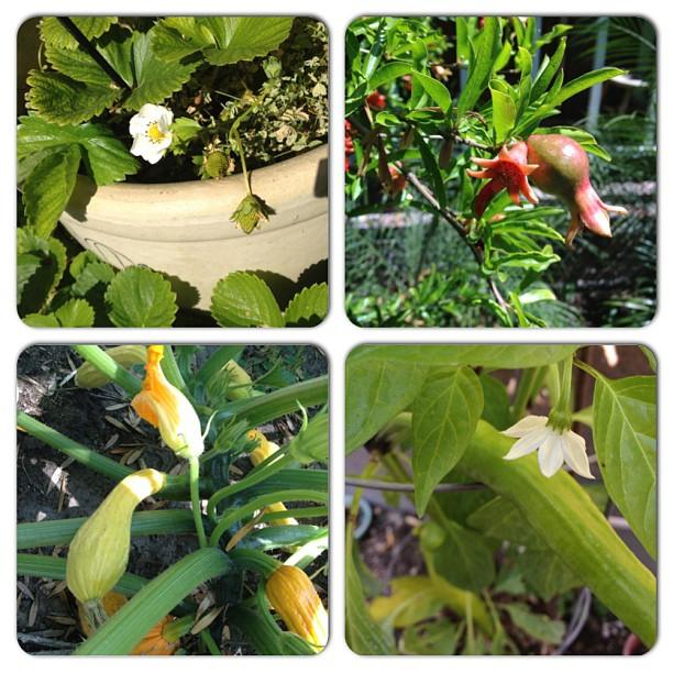 #flowersmakemehungry