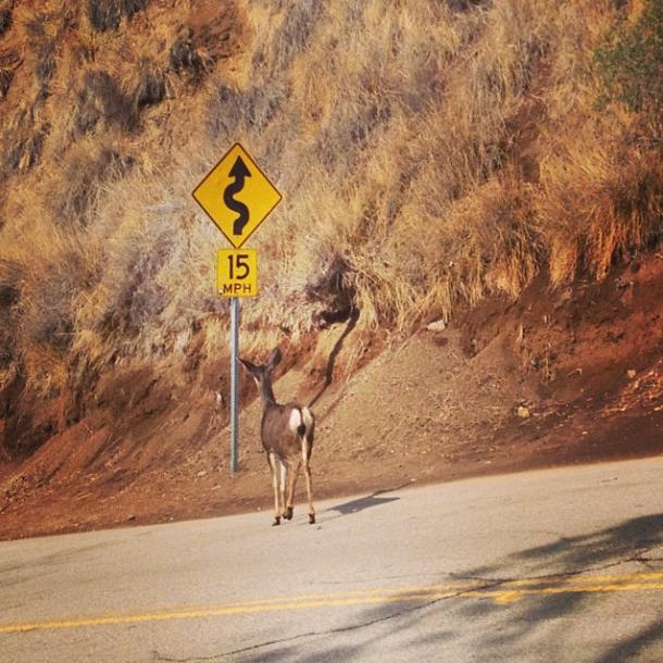 thewholeruth literate deer