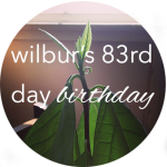 Button Wilbur 83 Bday