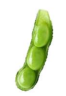 soybean vertical