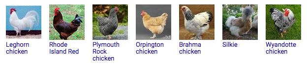 Wikipedia chicken types